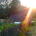 W naszym ogródeczku...